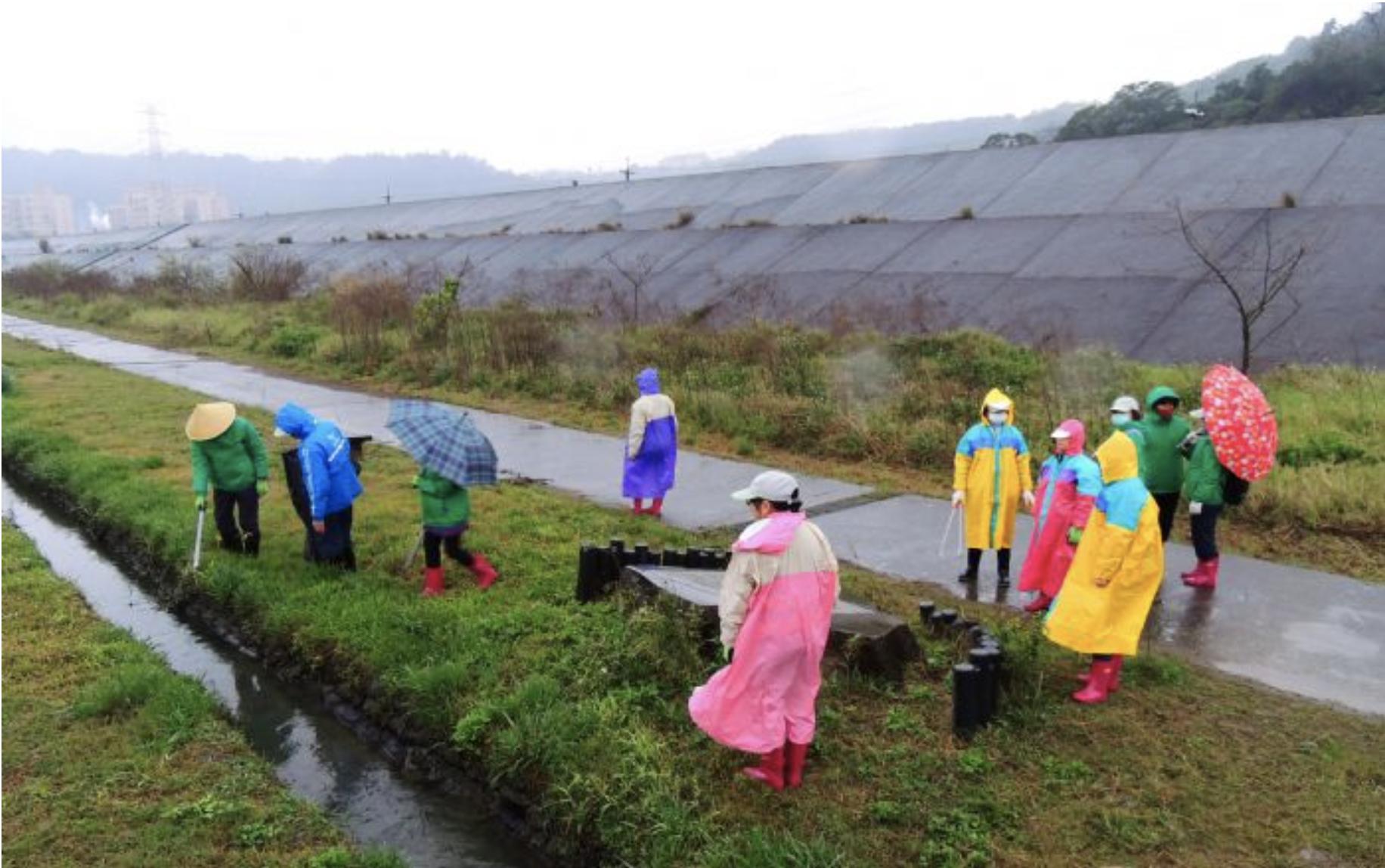 大嵙崁人工濕地維護