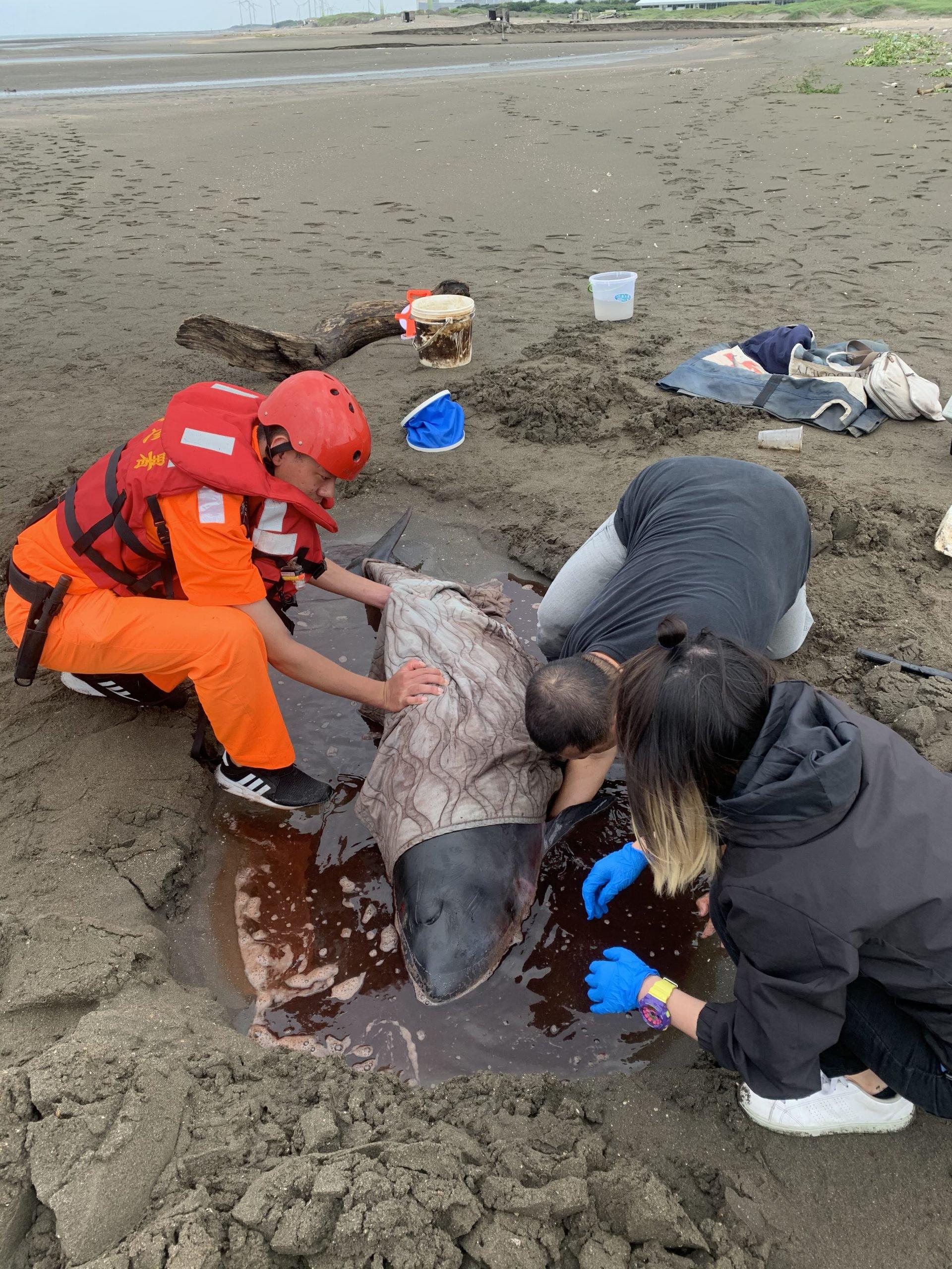 活體鯨豚救援紀錄-要記錄呼吸心跳