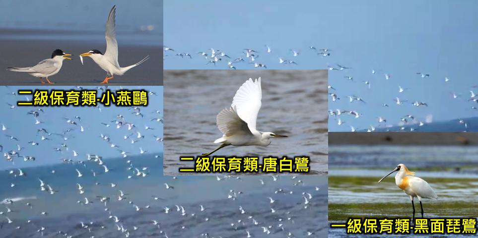 許厝港濕地鳥類