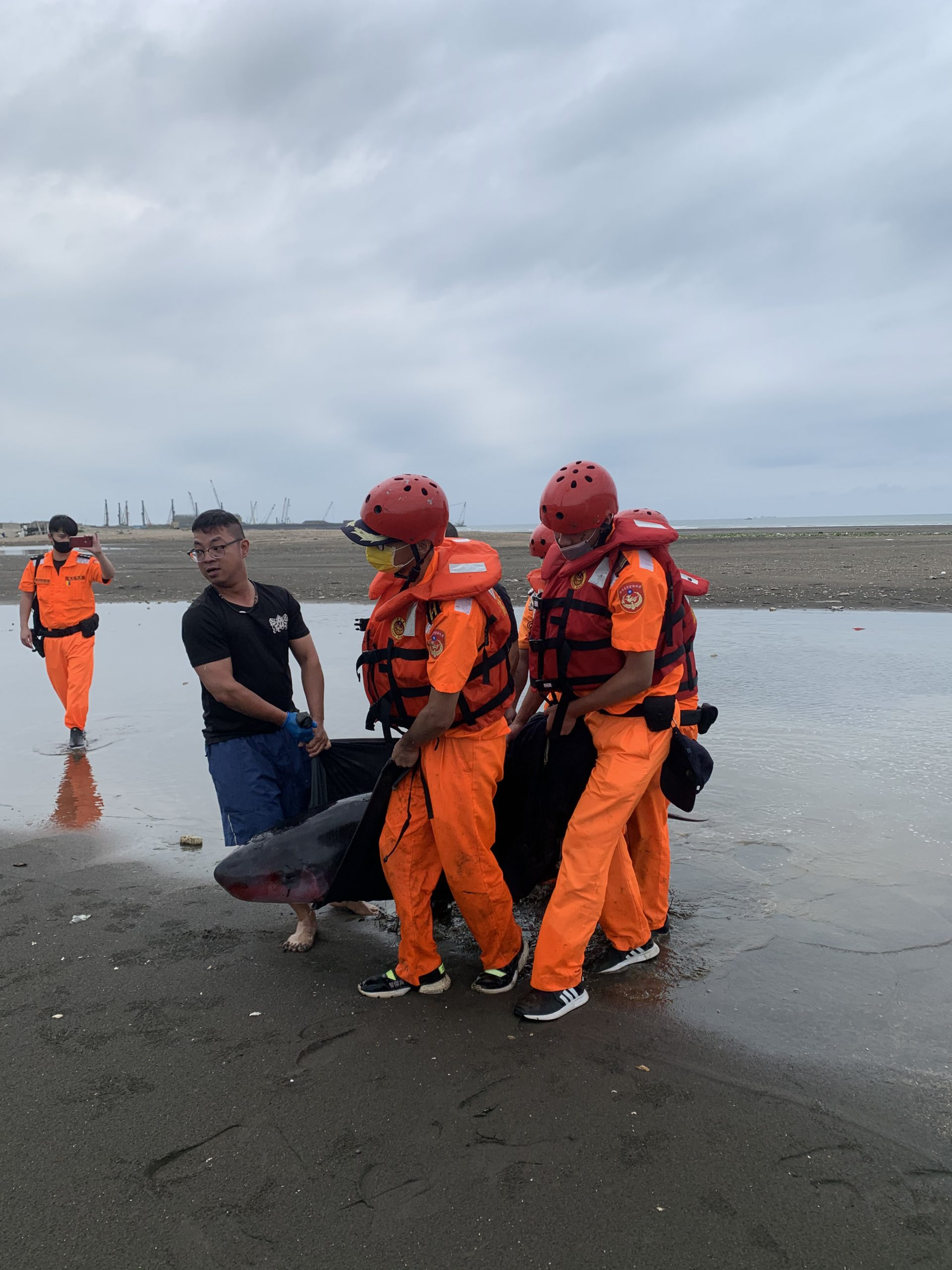 活體鯨豚救援紀錄