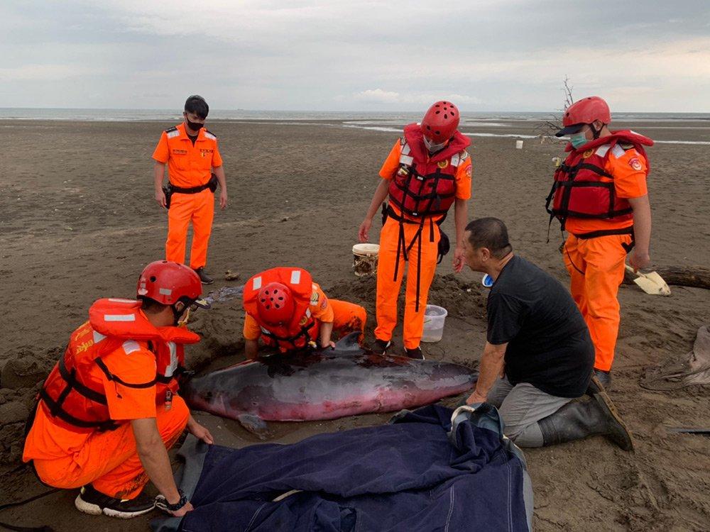 協助海洋保育類野生動物擱淺救援