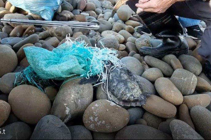 活體海龜救援紀錄