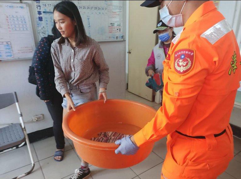 將海龜送回海洋大學海龜實驗室進行治療及照護