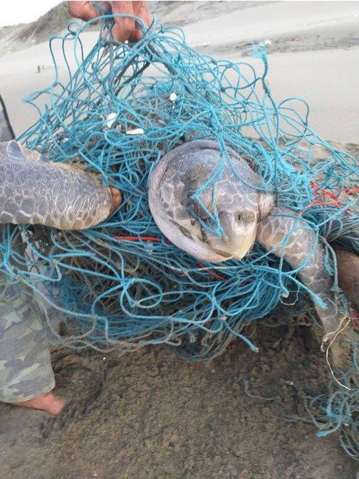 海洋保育類野生動物救援